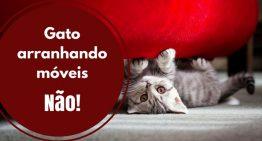 Seu gato arranha móveis? Dicas infalíveis para resolver esse problema