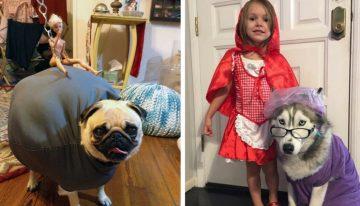 20 cães que fizeram o maior sucesso no Halloween