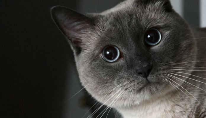 12 fatos curiosos que a ciência descobriu sobre gatos e que você provavelmente não sabia