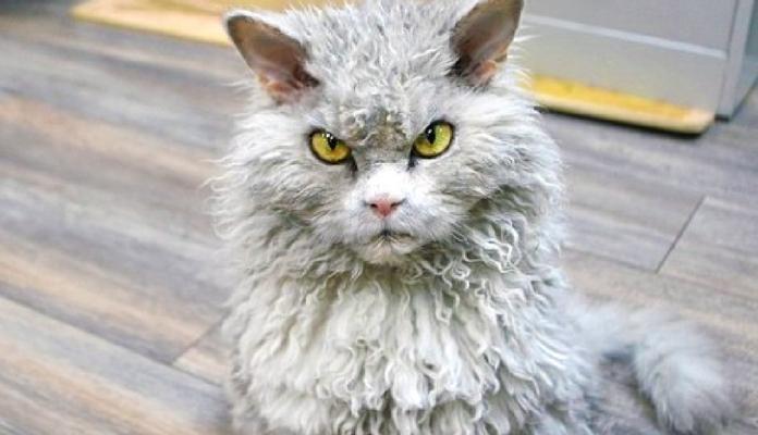 Conheça Albert, o gato que está conquistando a internet graças ao seu olhar severo