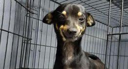 Cãozinho dá sorrisinéo ao ser resgatado por voluntários