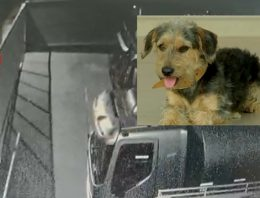 Câmera registra cão sendo lançado por cima de muro em posto de combustíveis