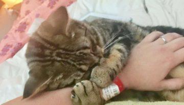 Gato não para de abraçar sua salvadora, que também foi abandonada quando nasceu