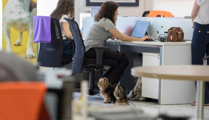 Empresa permite levar os bichinhos de estimação para o trabalho