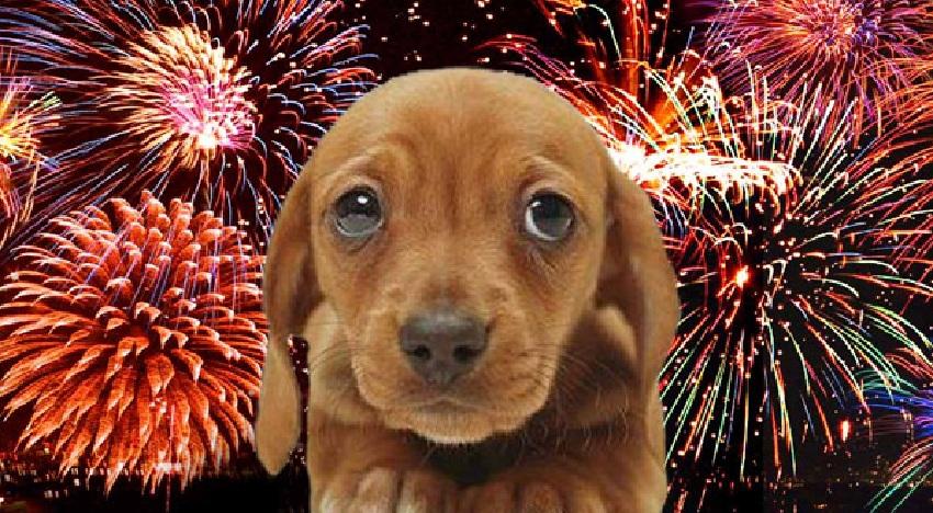 Fogos de artifício: 10 dicas para proteger o seu cãozinho do barulho