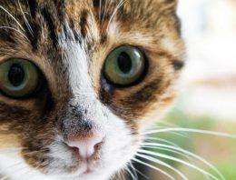 O que fazer em caso de envenenamento em gatos