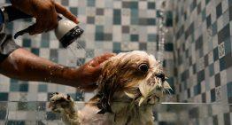 Incrível: hotel para cachorros na Índia tem spa, natação e camas fofinhas