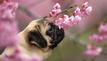 Belas legendas para postar fotos com o seu cachorro