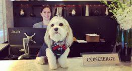 Hotel oferece companhia de cachorrinho fofo como serviço de quarto