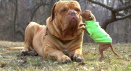10 raças de cães pequenos e fofinhos que você simplesmente vai amar!