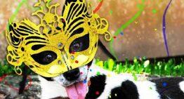 Carnaval: 5 dicas para proteger seu animal de estimação na folia