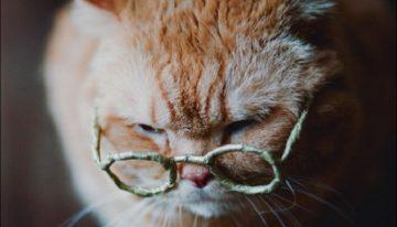 Saiba as principais doenças de gatos idosos e como evitá-las