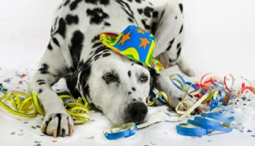Fantasias para cachorros: 5 ideias super fáceis de fazer em casa!