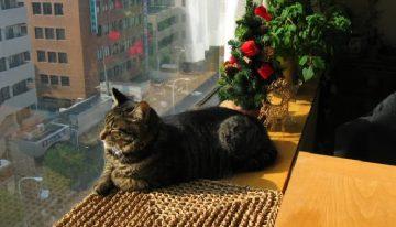 As 10 melhores raças de gatos para apartamento [Você vai amar]