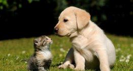 Quem disse que são inimigos? Cães e gatos podem ser melhores amigos!
