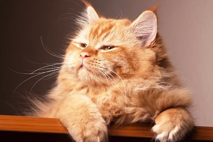 Bigode para frente e os olhos quase fechados: Gato feliz, e se estiver ronronando, é uma felicidade extrema.