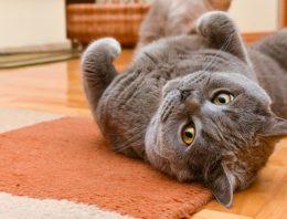 Você tem um gato feliz ou triste? Conheça os sinais de felicidade do felino