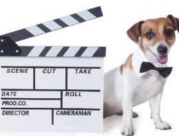 Os 10 melhores filmes de cachorros para assistir na Netflix