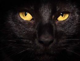Adoções de gatos pretos aumentam após o filme Pantera Negra
