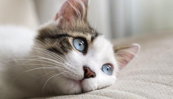 Confira 100 nomes para gatos e significados [Os Melhores]