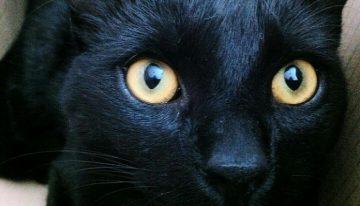 Como funcionam os olhos dos gatos [visão noturna e muito mais]