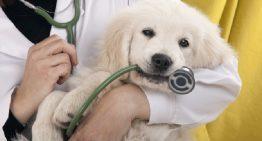 Planos de Saúde Animal: O Mercado Que Não Para de Crescer