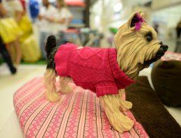 Novidades fashion para cães e gatos entre os destaques da 6ª Feipet