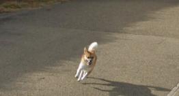 Cachorro persegue carro do Google Street View e aparece em várias fotos