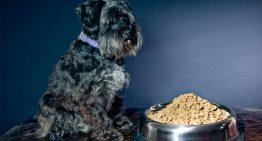 É saudável trocar de ração cada vez que o cachorro se cansa da ração?