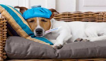 Confira 4 sinais de alerta do seu cão para levá-lo ao veterinário